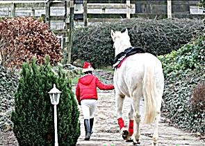 Frohe Weihnachten Pferd.Atz Pur Ausbildungs Und Therapiezentrum Für Pferd Und Reiter